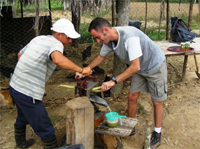הכנת סוכר , וינאלס, קובה